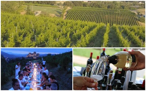 vigne emilia