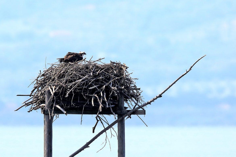 Orbetello nido