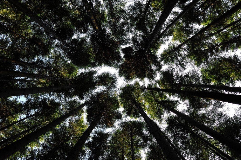 incendio foresta bosco ambiente01 natura 1