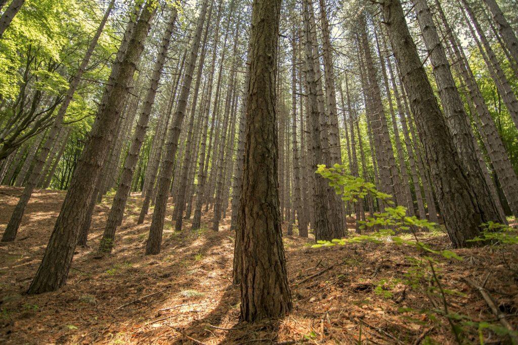 incendio foresta bosco ambiente01 natura
