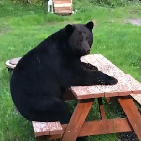 Masha e orso il cartone animato più amato mondofantastico