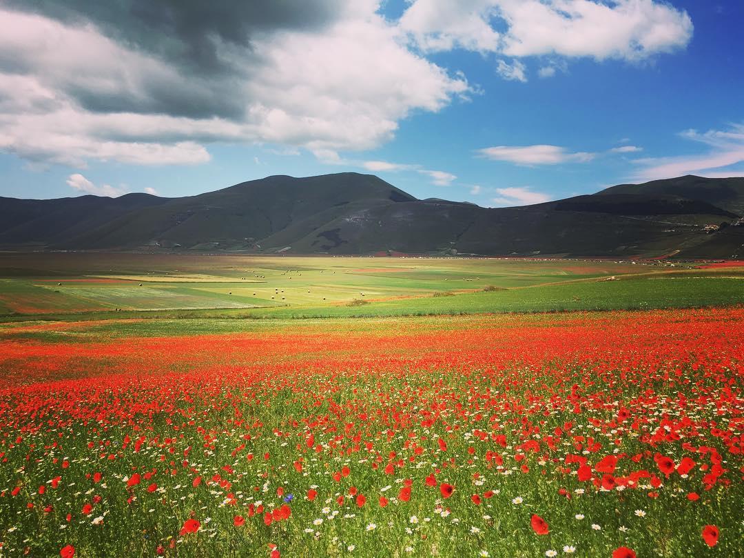 Castelluccio Norcia fioritura Pian Grande