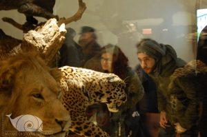 Museo di Storia Naturale-Galleria dei mammiferi - Pisa
