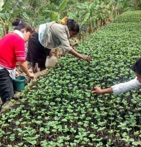 Riforestazione Nicaragua