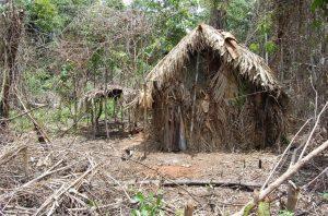 indigeno solo brasile