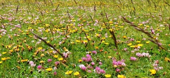 velino camminiamo biodiversità