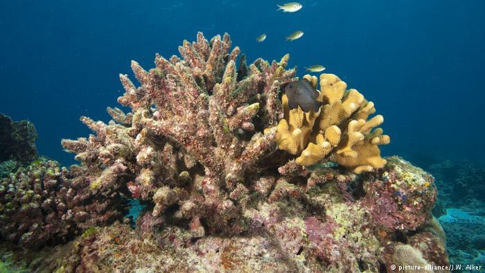Coralli di Maya Bay