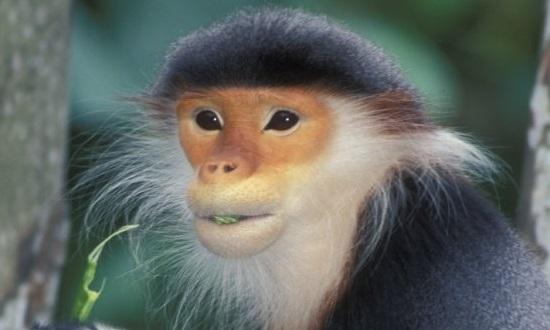 scimmia toi philadelphia