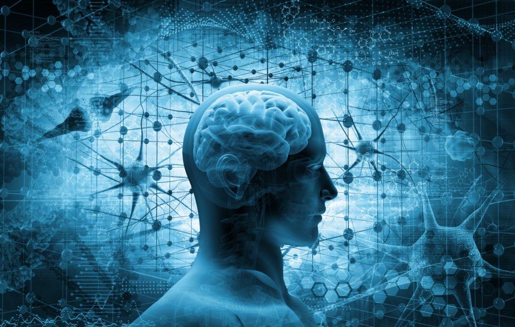 cervello neuroni