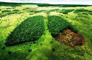 foresta amazzonica brasile