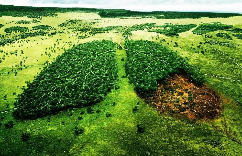 Risultati immagini per foresta tropicale polmone