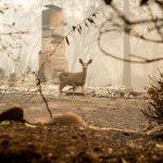 Incendi, la California continua a bruciare: decine di morti e centinaia di dispersi, il bilancio peggiore dal 1933 [GALLERY]