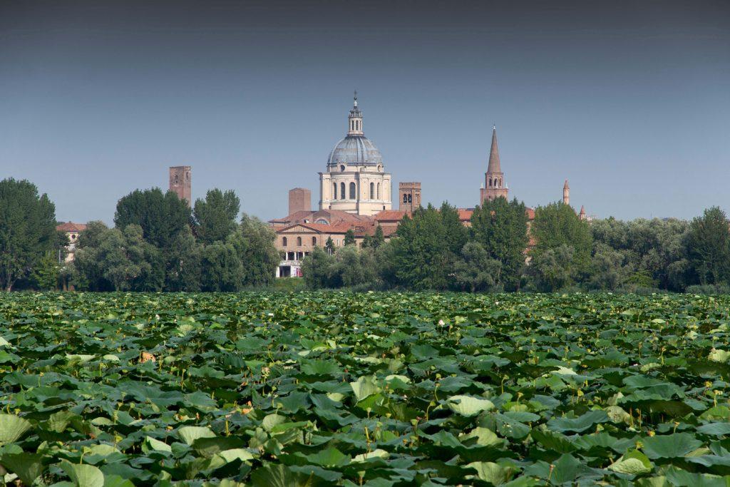 Mantova 2018 World Forum on Urban Forests