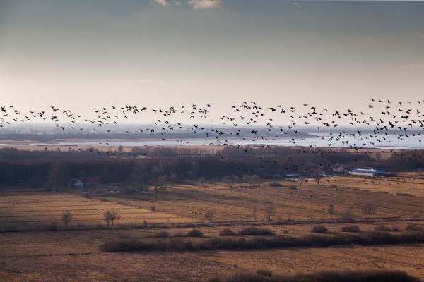 caccia uccelli polonia