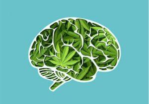 cannabis memoria cervello