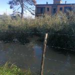 Maltempo in Calabria, il fiume Crati esonda e fa una strage nel Cosentino: mille pecore e mucche muoiono annegate [FOTO]