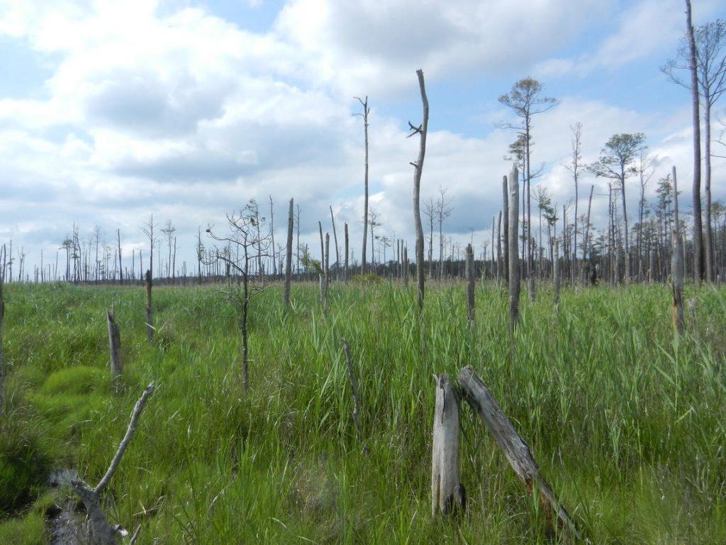 foreste fantasma USA