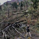 """Maltempo sulle Alpi, valli distrutte dalla """"Tempesta delle Dolomiti"""": immagini SHOCK dalla Gola dei Serrai di Sottoguda e dalla Valle di San Lucano [FOTO]"""