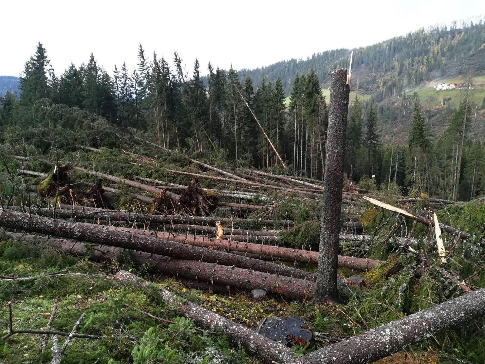 maltempo trentino alberi abbattuti