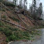 Maltempo: abbattuti 14 milioni di alberi, a rischio l'equilibrio ambientale