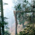 """Allerta Meteo e Neve, l'esperto: """"alto rischio valanghe nei boschi distrutti dal maltempo"""""""