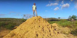 cumuli termiti brasile