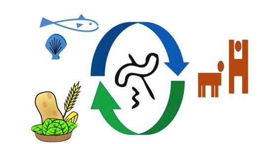 microbioma enea