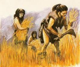 """neolitico-grano-agricoltura """"Le sbufale"""", il caso dei veleni bianchi: farina e glutine, sono nocivi per la nostra salute?"""