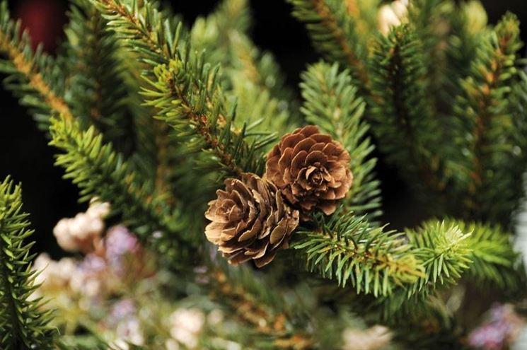 aghi-pino-natale-albero