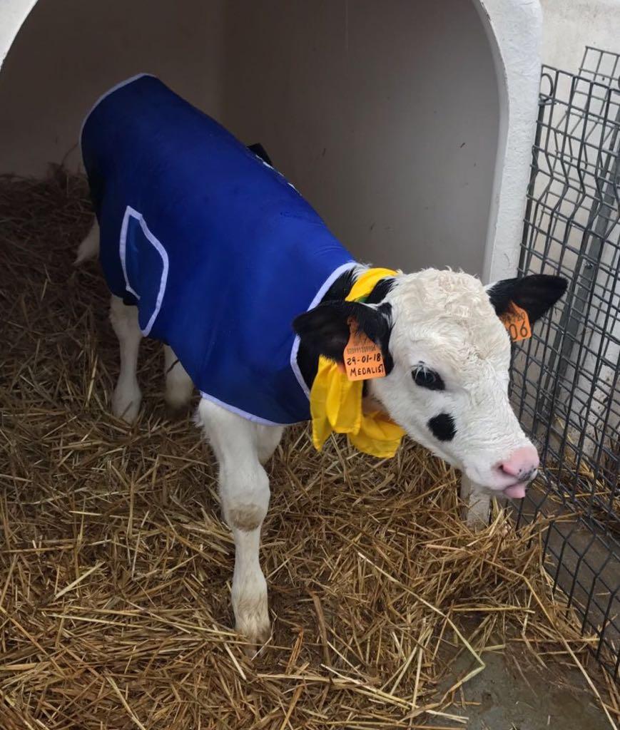 cappotto mucche Coldiretti