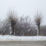 Maltempo: Molise nella morsa del gelo, un metro di neve a Capracotta [GALLERY]