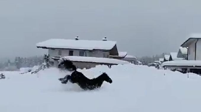cavalli neve austria