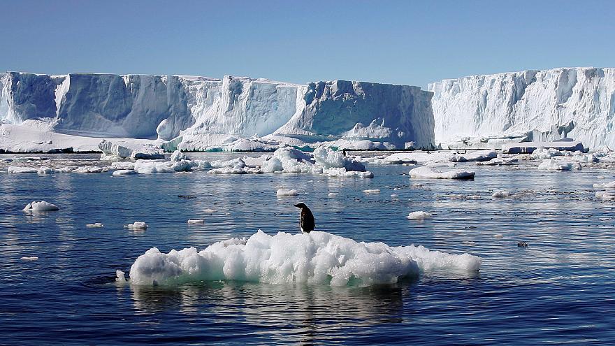 pinguino-antartide-riscaldamento-globale