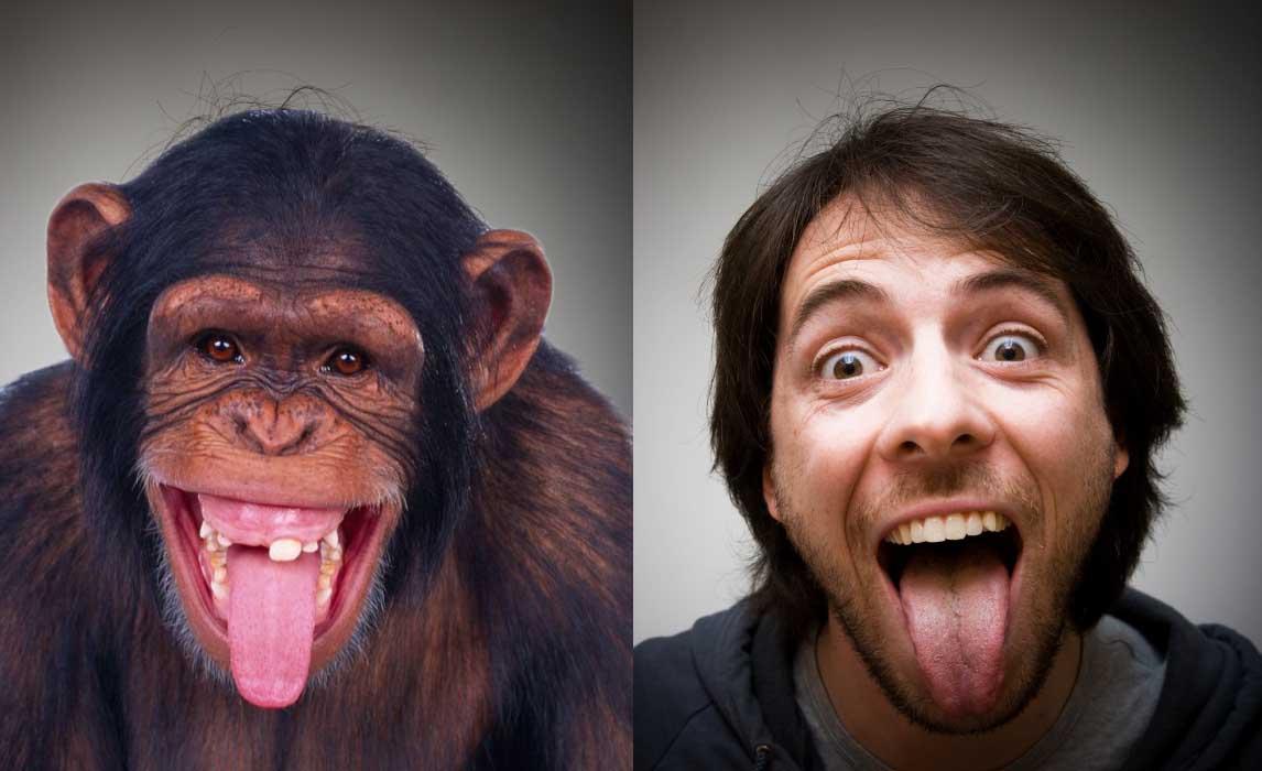 scimpanzé più evoluti uomo
