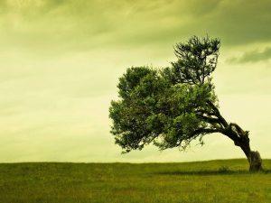 alberi terra piatta