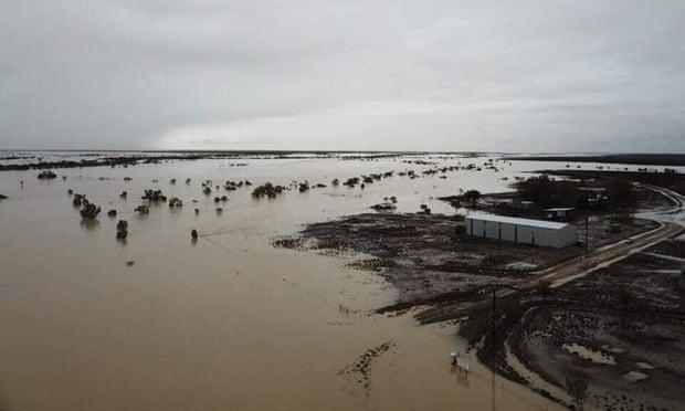 animali morti alluvioni australia