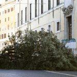 Forte vento, disastro a Roma: enorme pino abbattuto al Gianicolo vicino il Fontanone, città nel caos. Tre morti [FOTO e VIDEO]