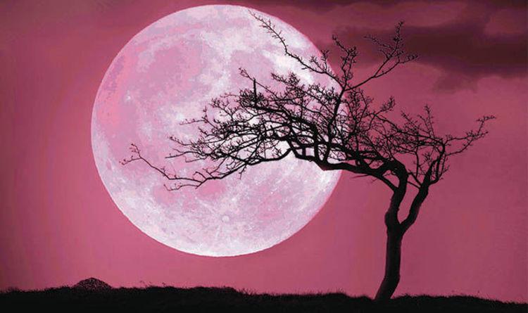 luna piena rosa