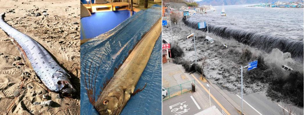 pesci regaleco terremoto giappone