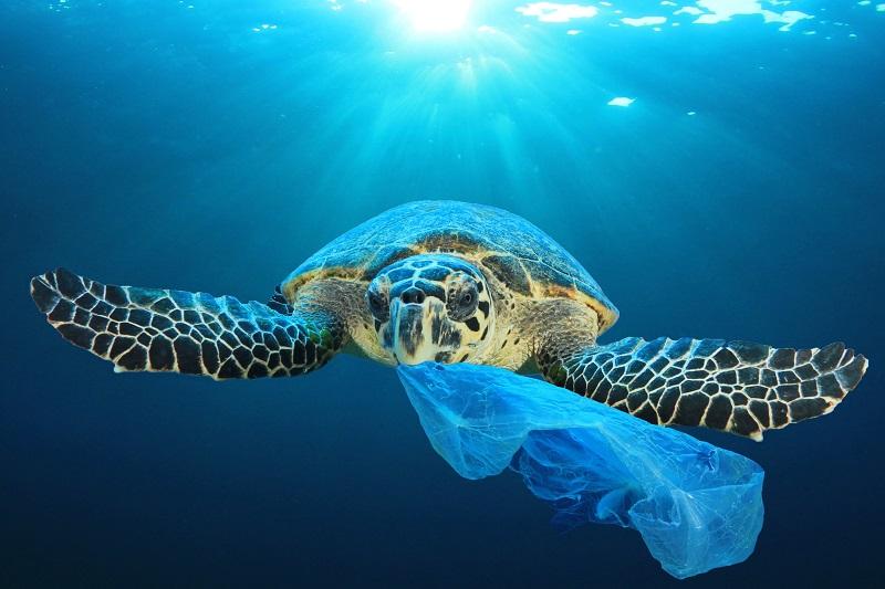 tartaruga mare plastica
