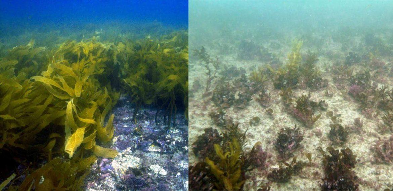 clima marino correnti calde confronto biodiversità