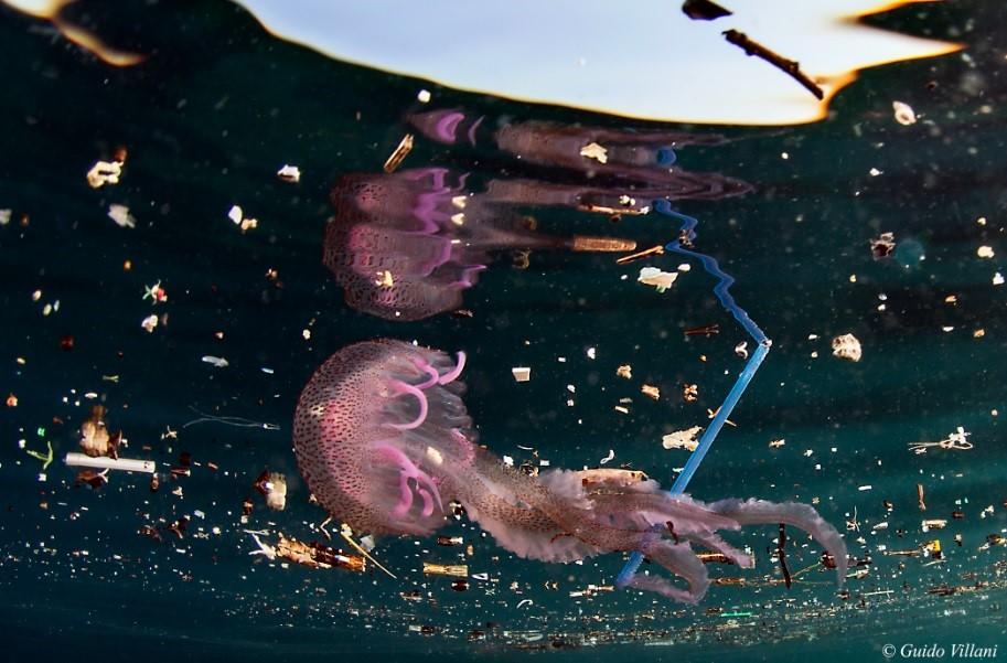 La medusa in un mare di rifiuti - foto di Guido Villani