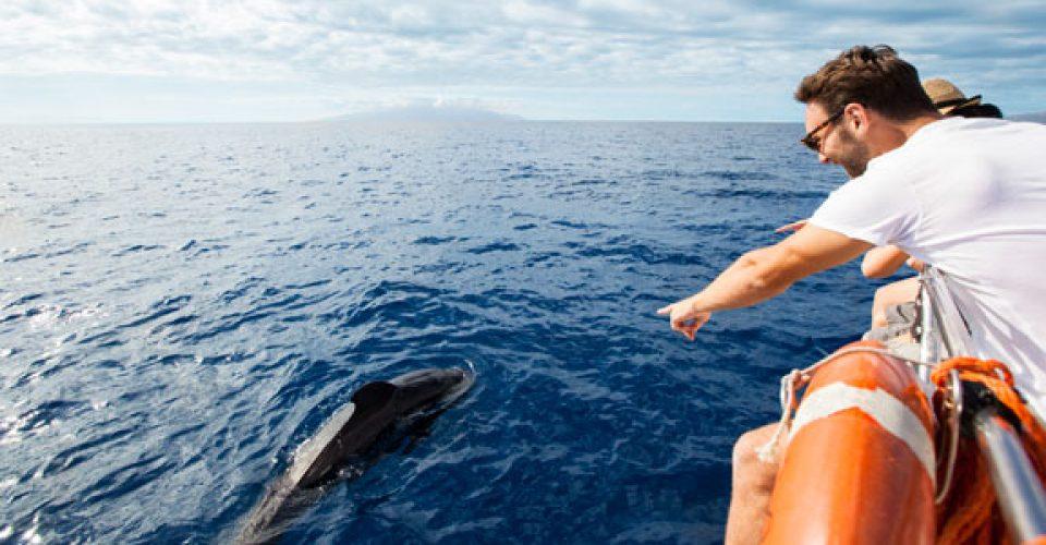 avvistamento cetacei delfini