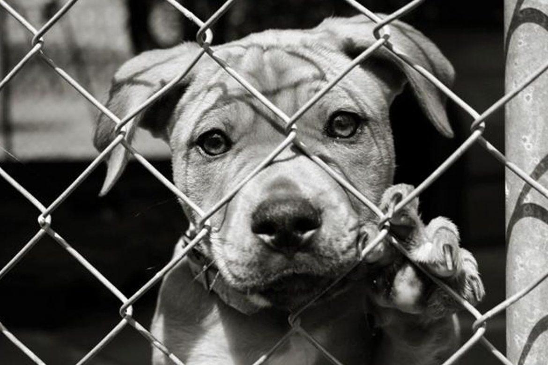 cane pignorato venduto ebay
