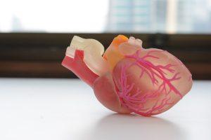 cuore 3d stampa bio