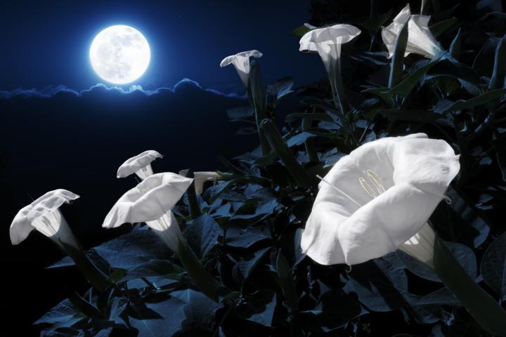 equinozio primavera superluna