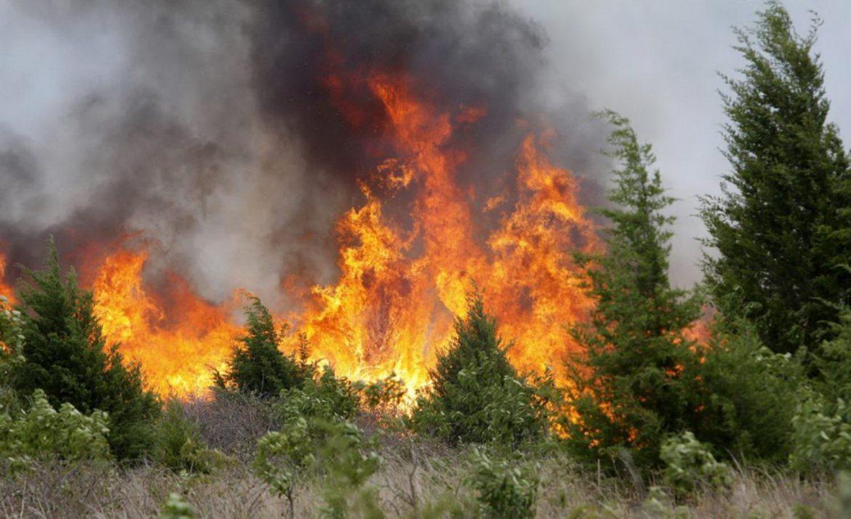 incendio incendi boschivi