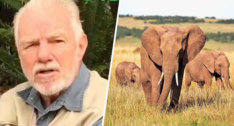 cacciatore elefanti