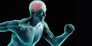 esercizio fisico cervello