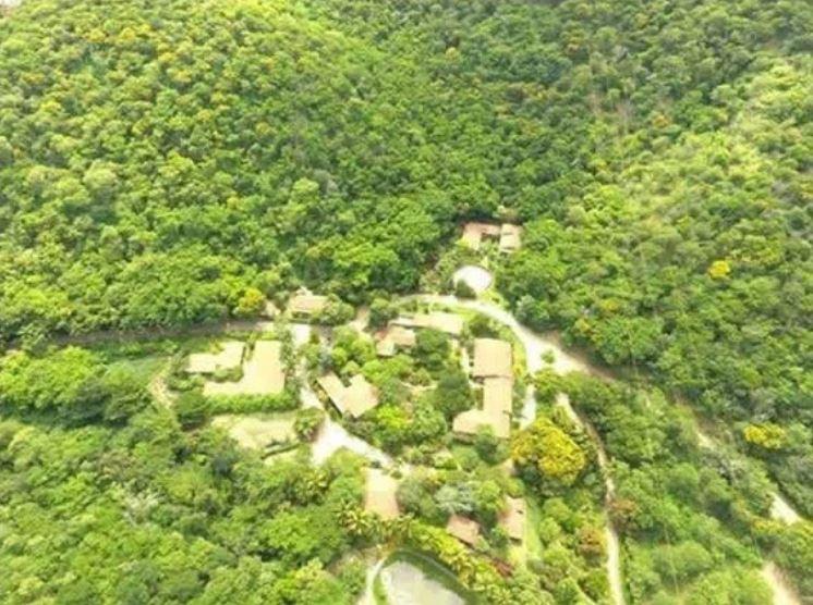foresta brasile